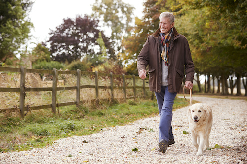 Dogs Aren't the Only Ones Benefiting from Walks