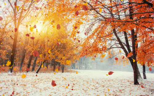 The Different Ways Seniors are Impacted By the Seasons Changing