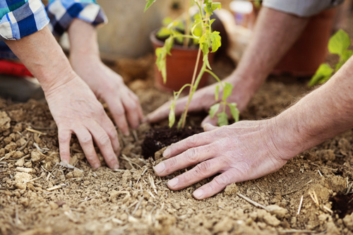 Enjoy the Outdoors with Accessible Gardening